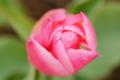 f:id:uralic:20120120234122j:image:medium