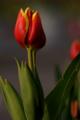 f:id:uralic:20120125015656j:image:medium