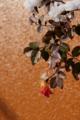 f:id:uralic:20120127232528j:image:medium