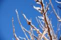 f:id:uralic:20120127232529j:image:medium