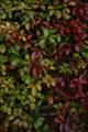f:id:uralic:20120212004355j:image:medium