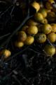 f:id:uralic:20120213114733j:image:medium
