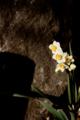 f:id:uralic:20120216011206j:image:medium