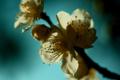 f:id:uralic:20120229230310j:image:medium