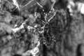 f:id:uralic:20120313011822j:image:medium