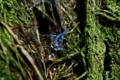 f:id:uralic:20120316231038j:image:medium
