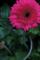 ぶれた 鉢植え