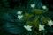 [花][草]