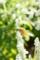 [花][虫]