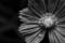 [花][虫][クモ][モノクロ]