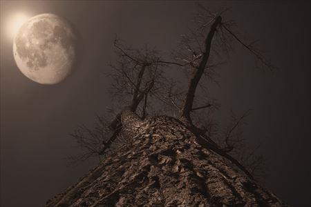 【2016年2月の満月】満月は感謝の日でもありできる理由を考える日:uranaijoshirei:spichie.com:20160221150841j:plain