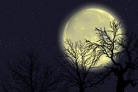 2016年3月の新月は新しく生まれ変わるための皆既日食の新月:uranaijoshirei:spichie.com:20160309215137j:plain
