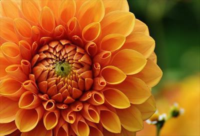 2016年9月9日は金運アップが上がる日?重陽の節句と世界占いの日が重なる日