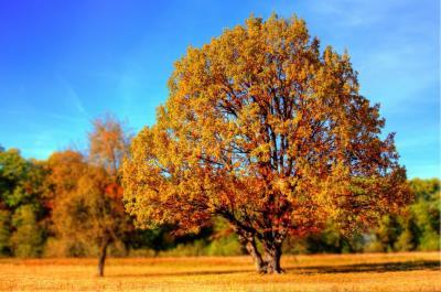 【秋分の日のスピリチュアル】春分からスタートした事の収穫の秋分までにするべき事とは?