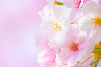 2017年春分の日のスピリチュアル!太陽の最大のパワーを受けてバランスを整える日