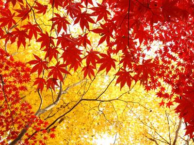 10月20日は秋の土用の始まり!新月と土用が重なった時に気をつけるべきことって何?