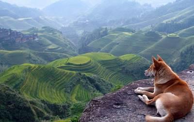 疲れた心を癒したい時は海へ、パワーを得たい時には山へ行くのがオススメな理由