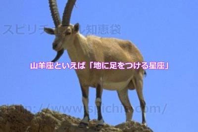 山羊座といえば「地に足をつける星座」