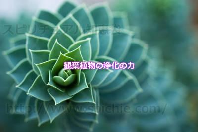 観葉植物の浄化の力