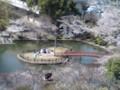 090402 安城 公園の さくら (3) 12:38