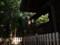 101210 桜神明社 拝殿 よこから うしろの 墳頂に ある 本殿を のぞく