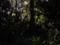 101210 桜神明社古墳の 頂上に ある 桜神明社 本殿を うらがわから みる