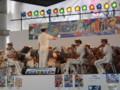 120805 安城 たなばた まつり 愛知県 警察 音楽隊 (10)