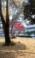 121129 10:49 安城 公園