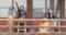 20151108_094809 本証寺まつり - 咲楽(さくら)(17) 800-430