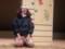20160131 桜樹舎★すぎうら事務所「東京ナガレ者」 (1)