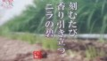 2016.5.17 旬食まんたん - 福来源 (32) 800-460