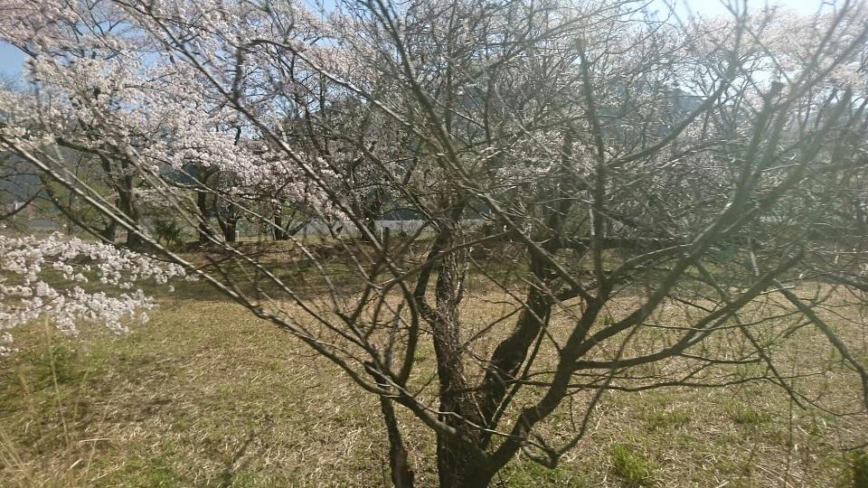 2018.3.28 大井川本線 (24) 千頭いきふつう - 大和田-家山間 960-540