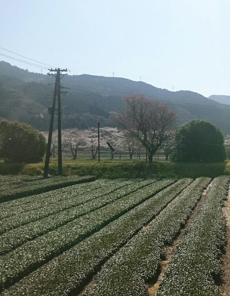 2018.3.28 大井川本線 (32) 千頭いきふつう - 家山-抜里間 780-1000