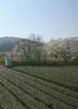 2018.3.28 大井川本線 (32-1) 千頭いきふつう - 家山-抜里間 720-1000