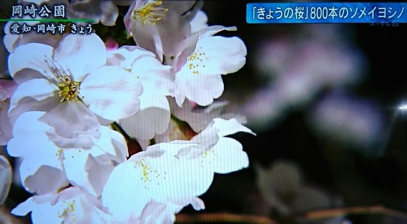 2019.4.1 テレビ朝日 - 岡崎公園 (3) 1270-700