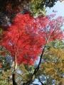 2020.11.14 東公園 - もみじ 1200-1600