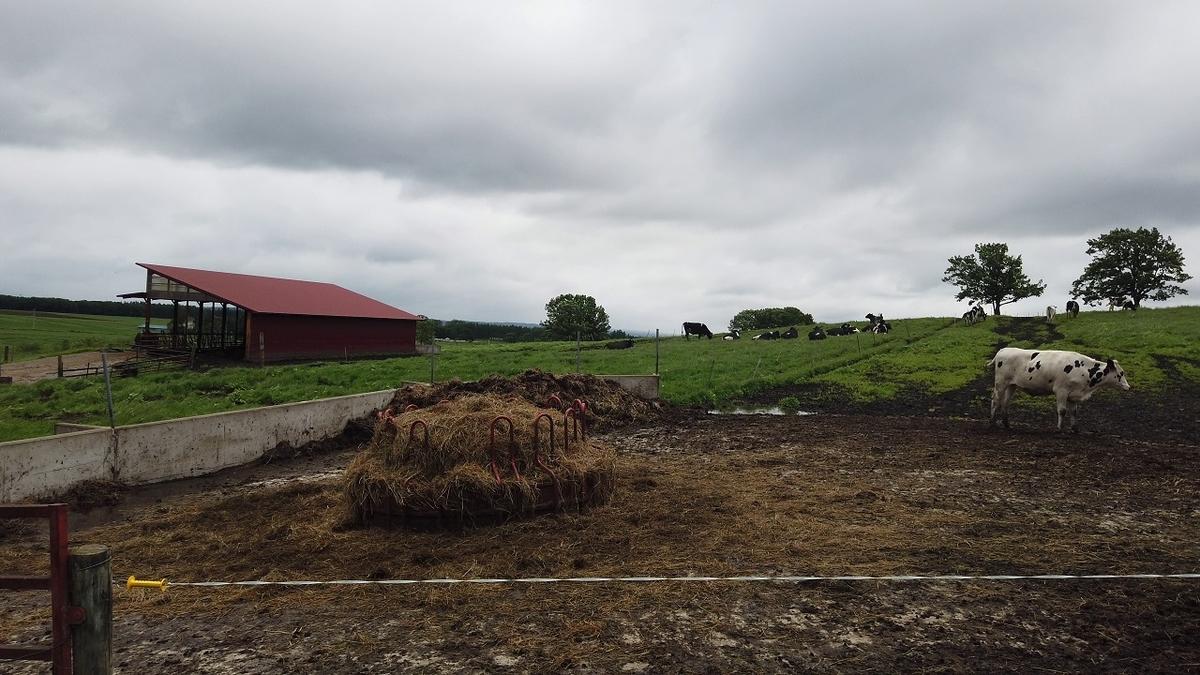 しんむら牧場の牛