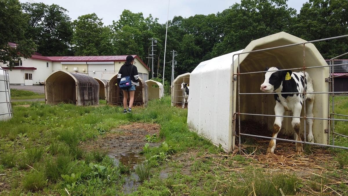 しんむら牧場の子牛
