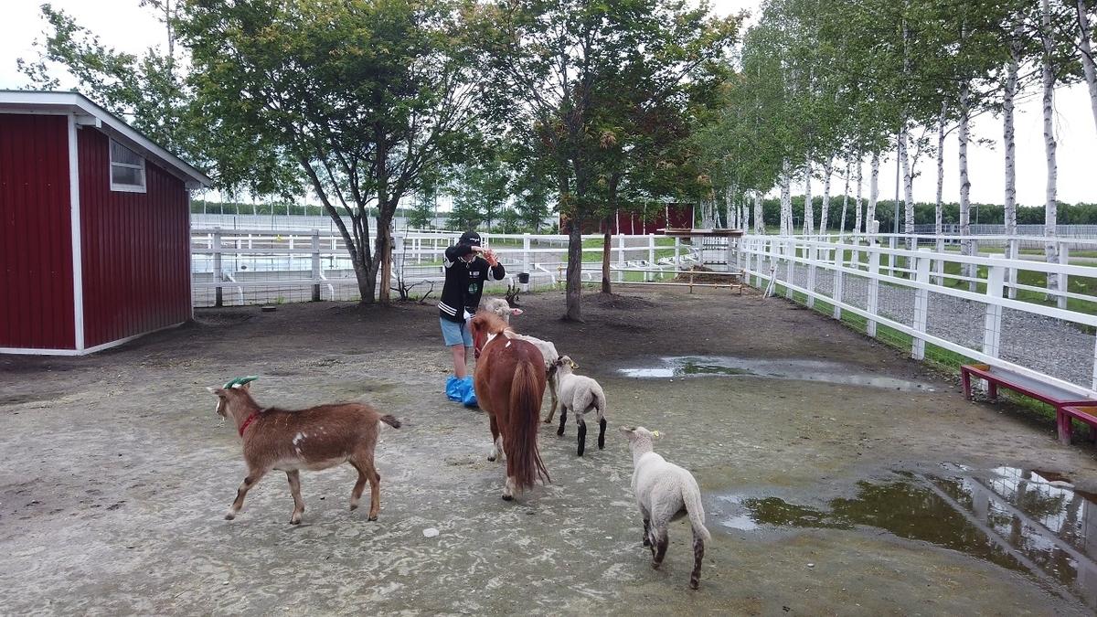 十勝牧場で餌やり体験