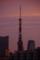 [2017年10月02日][東京タワー]