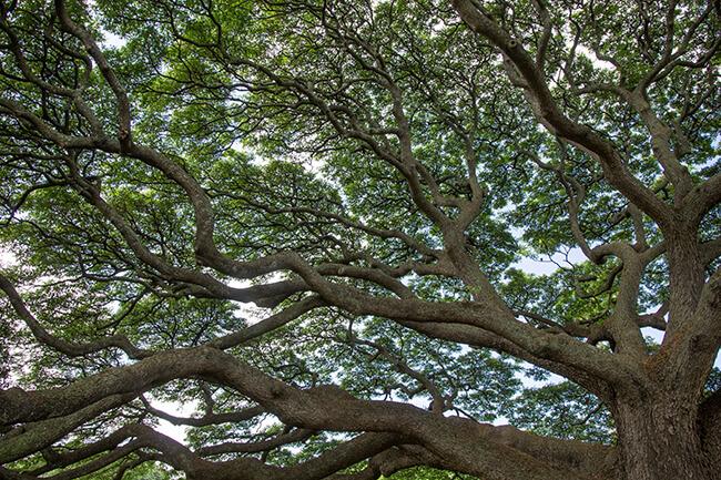 この木なんの木のアップ画像
