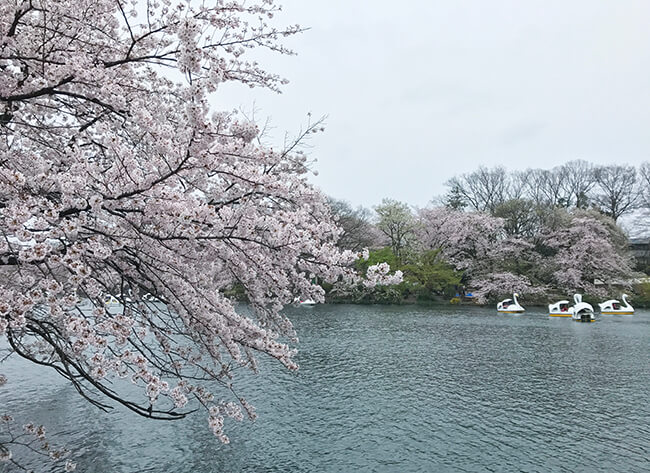 井の頭公園・2017春