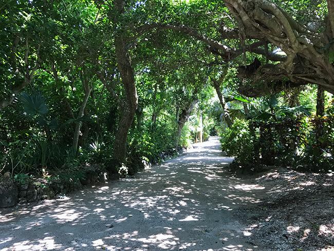 由布島の森