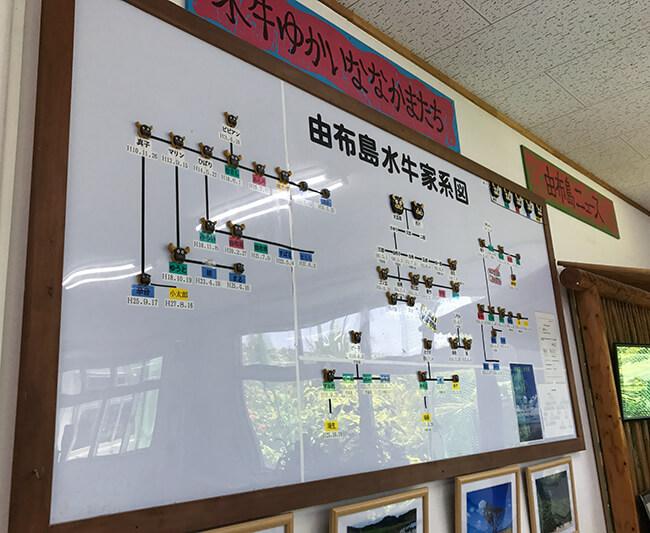 水牛の家系図