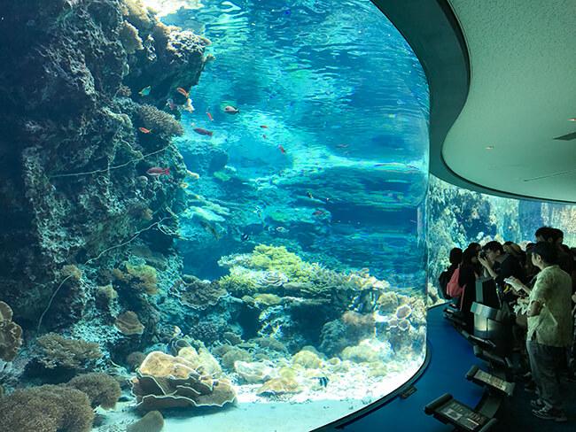 賑わう美ら海水族館
