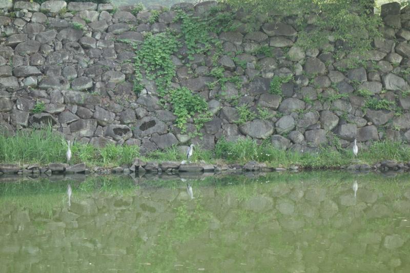 f:id:uroburo:20130812081223j:image:w400