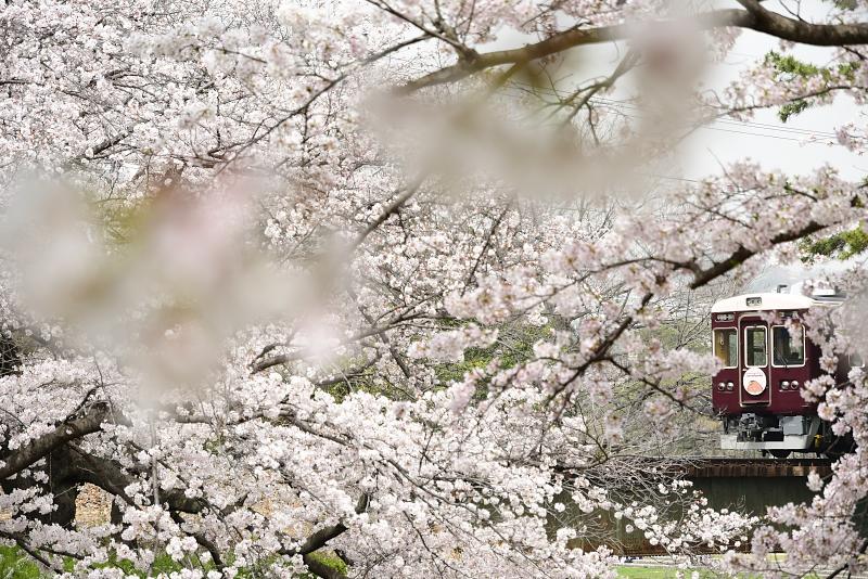 f:id:urotsukiki:20210408173352j:plain