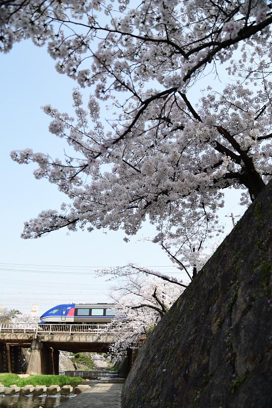 f:id:urotsukiki:20210408173614j:plain