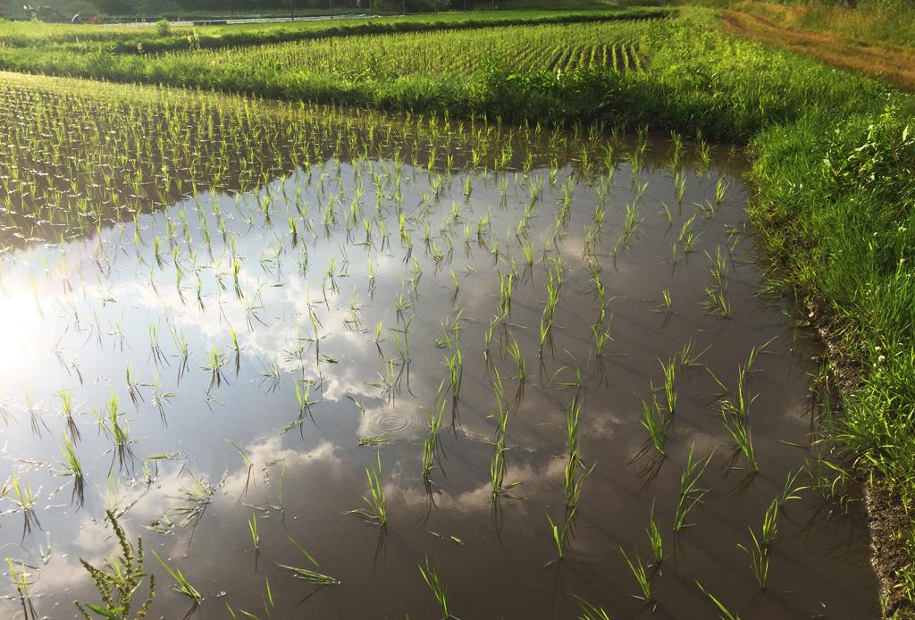 f:id:urugi-farmers:20171205224349j:plain