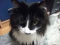 [猫] 白い目
